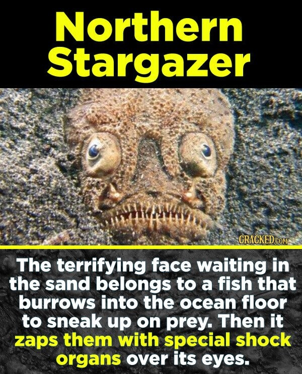 19 Terrifying Real-World Monsters You Won't Believe Exist - The terrifying face waiting in the sand belongs to a fish that burrows into the ocean floo