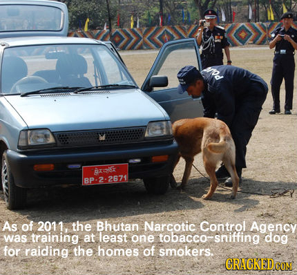 rod Axi BP:2-2671 As of 2011, the Bhutan Narcotic Control Agency was training at least one tobacco- tobacco- dog for raiding the homes of smokers. CRA