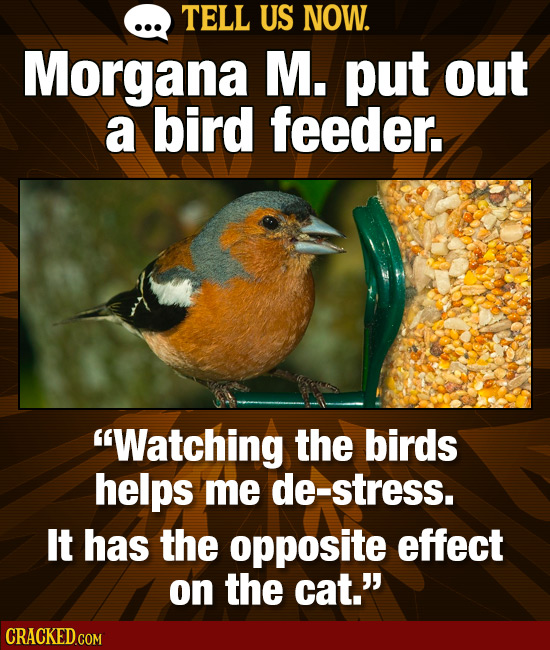 TELL US NOW. Morgana M. put out a bird feeder. 'Watching the birds helps me de-stress. It has the opposite effect on the cat.