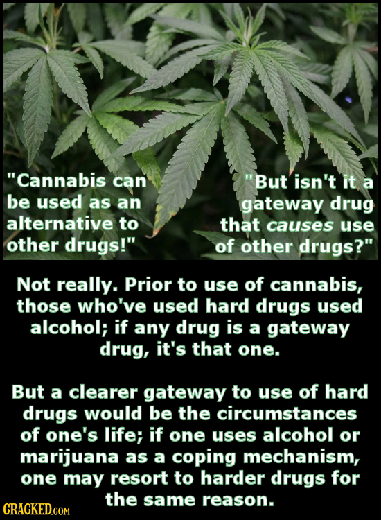 Cannabis can But isn't it a be used as an gateway drug alternative to that causes use other drugs! of other drugs? Not really. Prior to use of can