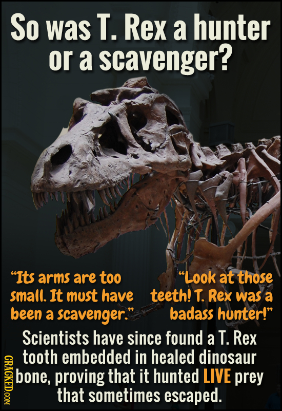 So was T. Rex a hunter or a scavenger? Its arms are too Look at those small. It must have teeth! T. Rex was a been a scavenger. badass hunter! Sci