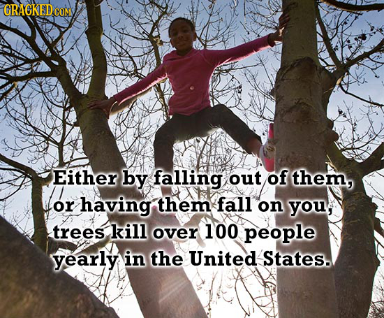 CRACKED COM Either by falling out of them, or having them fall on you, trees kill over 100 people yearly in the United States.