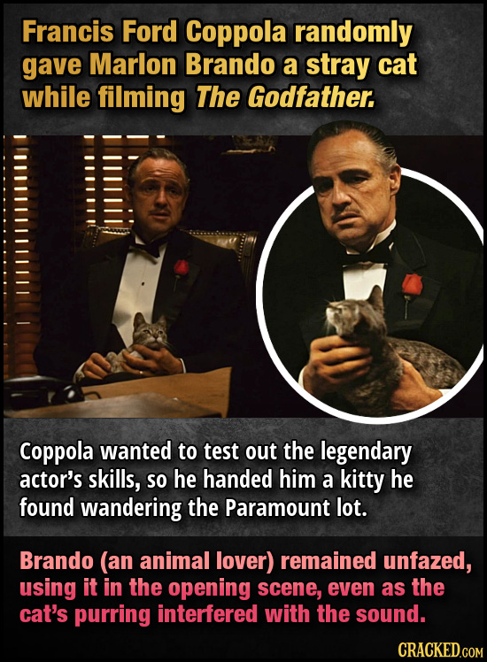 Francis Ford Coppola randomly gave Marlon Brando a stray cat while filming The Godfather. Coppola wanted to test out the legendary actor's skills, SO