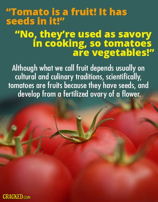 4Tomato is a fruit! It has seeds in it! No, they're used as savory in cooking, SO tomatoes are vegetables! Although what we call fruit depends usual
