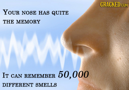 YOUR NOSE HAS QUITE THE MEMORY IT 50, 000 CAN REMEMBER DIFFERENT SMELLS