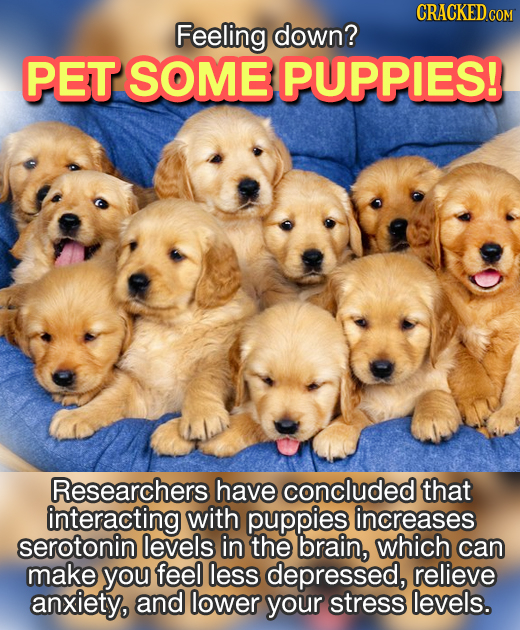 Feeling down? PET SOME PUPPIES! Researchers have concluded that interacting with puppies increases serotonin levels in the brain, which can make you f