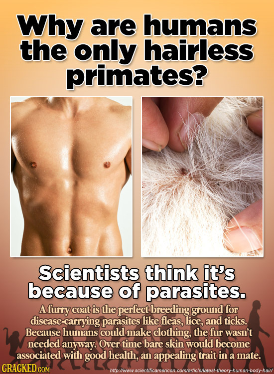 Why are humans the only hairless primates? Scientists think it's because of parasites. A furry coat is the perfect breeding ground for disease-carryin
