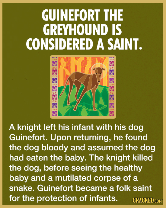GUINEFORT THE GREYHOUND IS CONSIDERED A SAINT. IFT 1 .. N Na A A knight left his infant with his dog Guinefort. Upon returning, he found the dog blood
