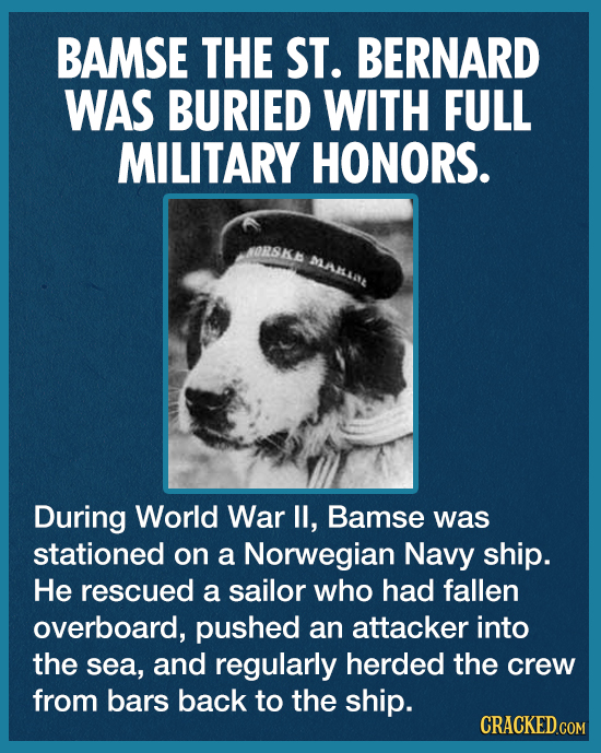 BAMSE THE ST. BERNARD WAS BURIED WITH FULL MILITARY HONORS. ORSKA MARLLAL During World War I, Bamse was stationed on a Norwegian Navy ship. He rescued