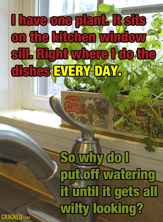 D have one plant It sits on the kitchen window sill. Right where do the dishes EVERY DAY. CANNEUN CEWNE TEA So why do 0 put off watering it until it g