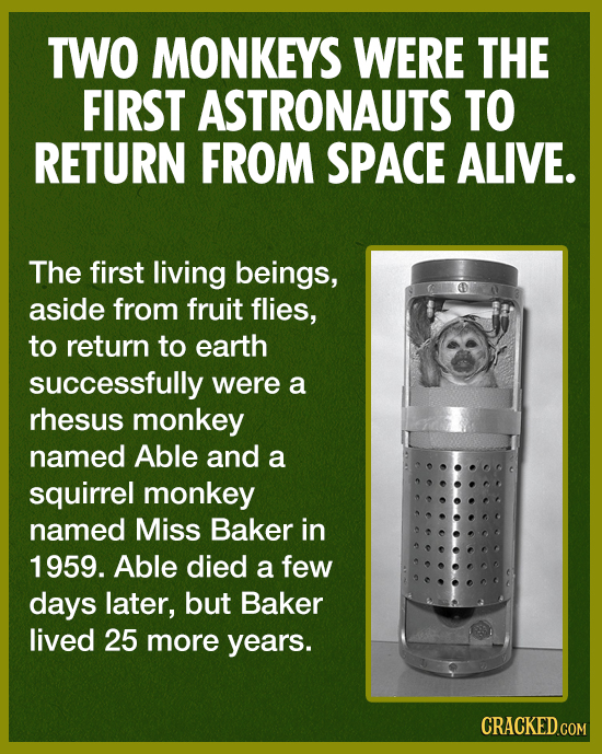 TWO MONKEYS WERE THE FIRST ASTRONAUTS TO RETURN FROM SPACE ALIVE. The first living beings, aside from fruit flies, to return to earth successfully wer