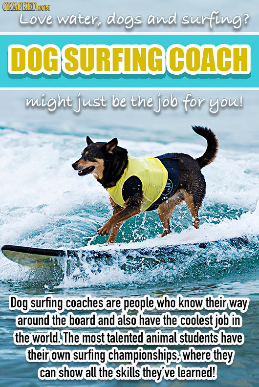 CRACKEDOON Love water, dogs and surfing? DOGSURFING COACH might just be the job for you! Dog surfing coaches are people who know their way around the