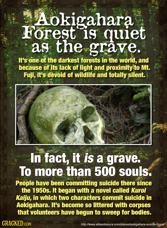 Aokigahara ForEST is quiet as the grave. It's one of the darkest forests in the world, and because of its lack of light and proximity to Mt. Fuji, it'