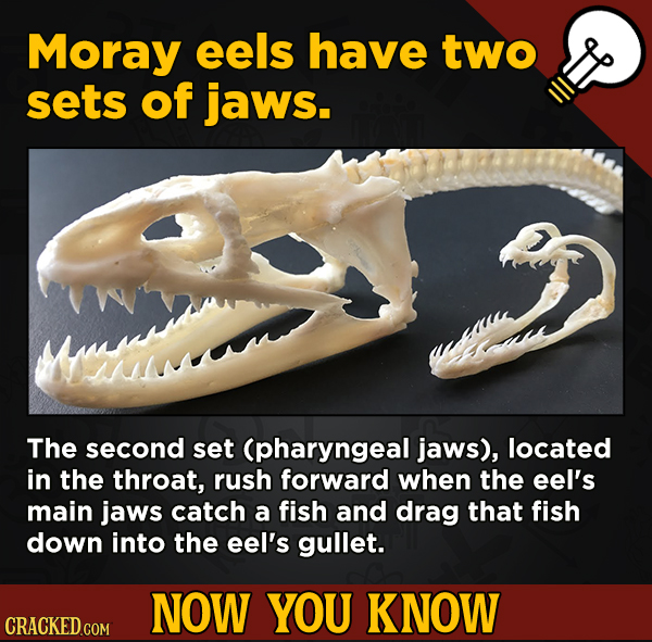 13 Surprising Facts About Movies And, Like, Life In General - Moray eels have two sets of jaws.