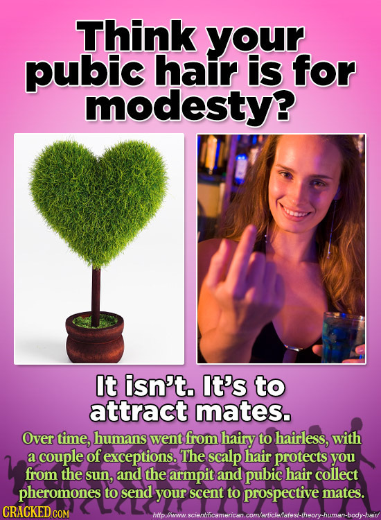 Think your pubic hair is for modesty? It isn't. It's to attract mates. Over time, humans went from hairy to hairless, with a couple of exceptions. The