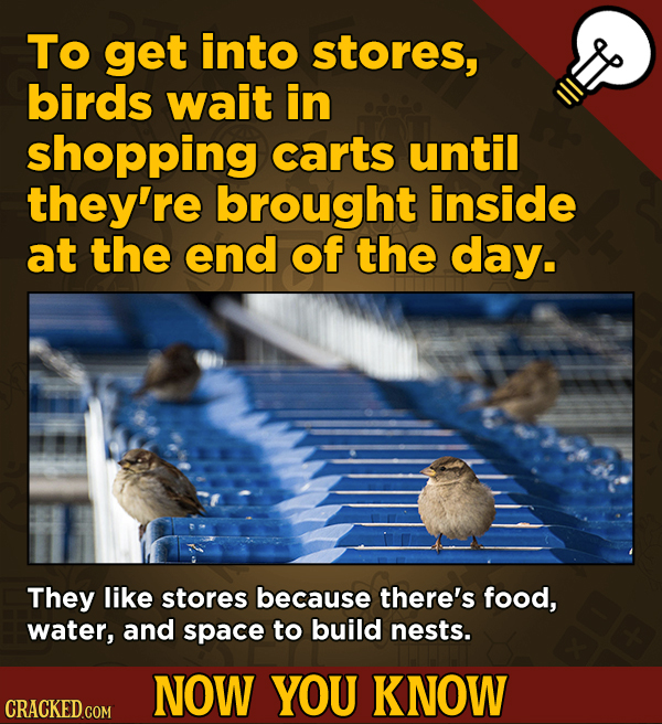 A Fresh Serving Of Movie-related And Miscellaneous Facts - To get into stores, birds wait in shopping carts until they're brought
