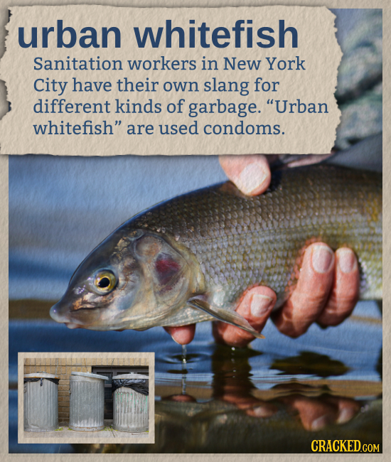 urban whitefish Sanitation workers in New York City have their own slang for different kinds of garbage. Urban whitefish are used condoms. CRACKED.C