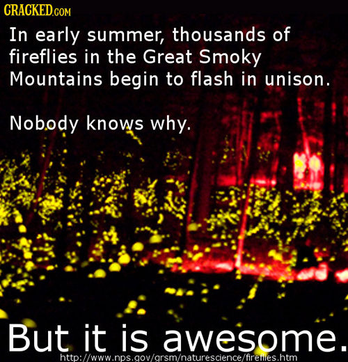 In early summer, thousands of fireflies in the Great Smoky Mountains begin to flash in unison. Nobody knows why. But it is awesome. htto:l/www.nps.aov