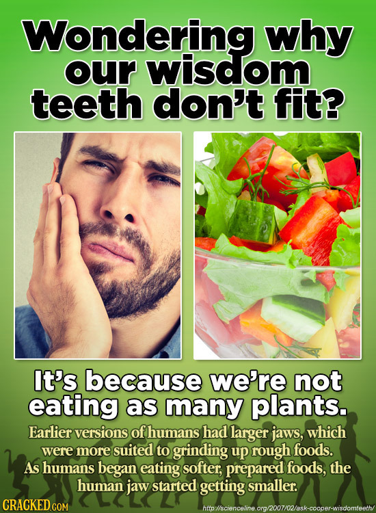 Wondering why our wisdom teeth don't fit? It's because we're not eating as many plants. Earlier versions of humans had larger jaws, which were more su