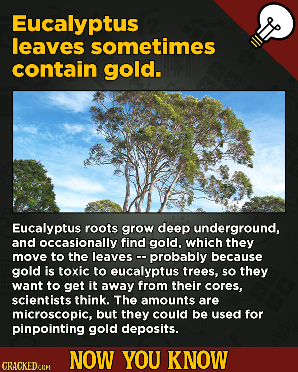 A Fresh Serving Of Movie-related And Miscellaneous Facts - Eucalyptus leaves sometimes contain gold.