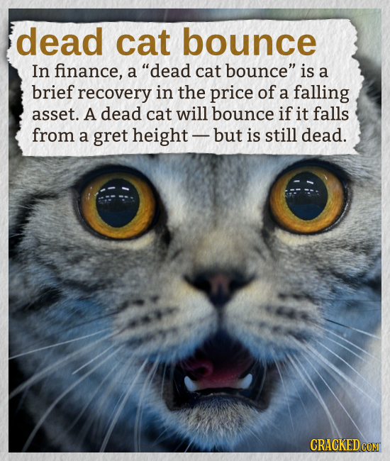 dead cat bounce In finance, a dead cat bounce is a brief recovery in the price of a falling asset. A dead cat will bounce if it falls from a gret he