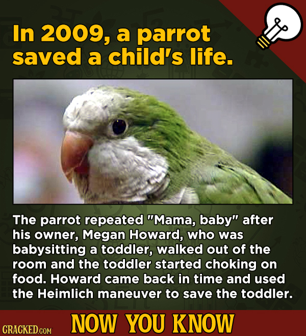 13 Little Things You Didn't Know About Movies And A Bunch Of Other Subjects - In 2009, a parrot saved a child's life.