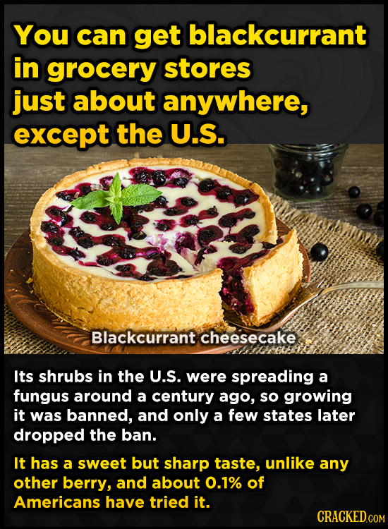 You can get blackcurrant in grocery stores just about anywhere, except the U.S. Blackcurrant cheesecake Its shrubs in the U.S. were spreading a fungus