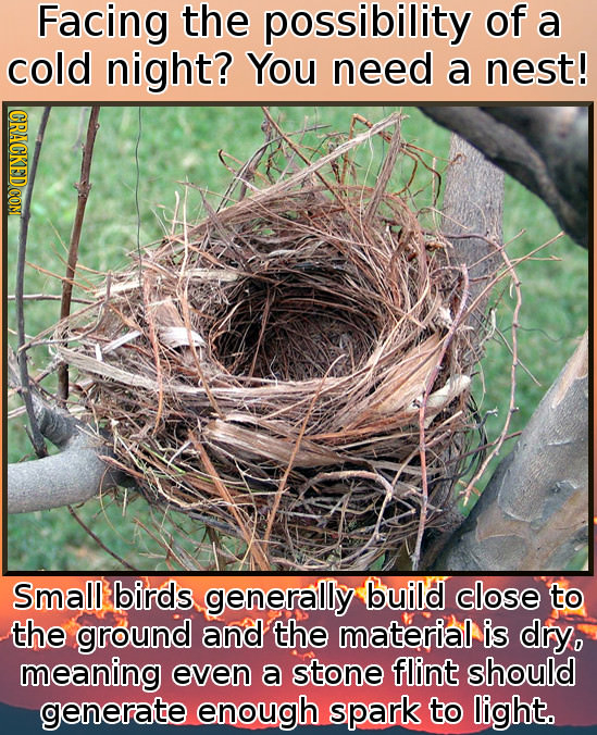 Facing the possibility of a cold night? You need a nest! Small birds generally build close to the ground and the material is dry, meaning even a stone