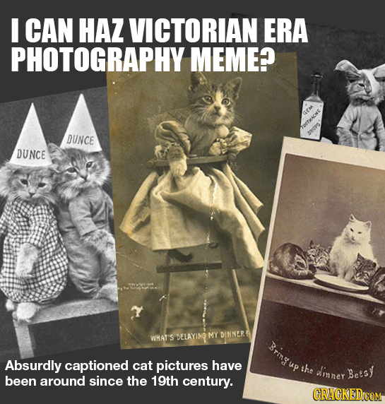 I CAN HAZ VICTORIAN ERA PHOTOGRAPHY MEME? DUNCE DROPS DUNCE WHAT'S DELAYING MY DINNER Brmgu Absurdly captioned cat pictures have the dinner Betsy bee