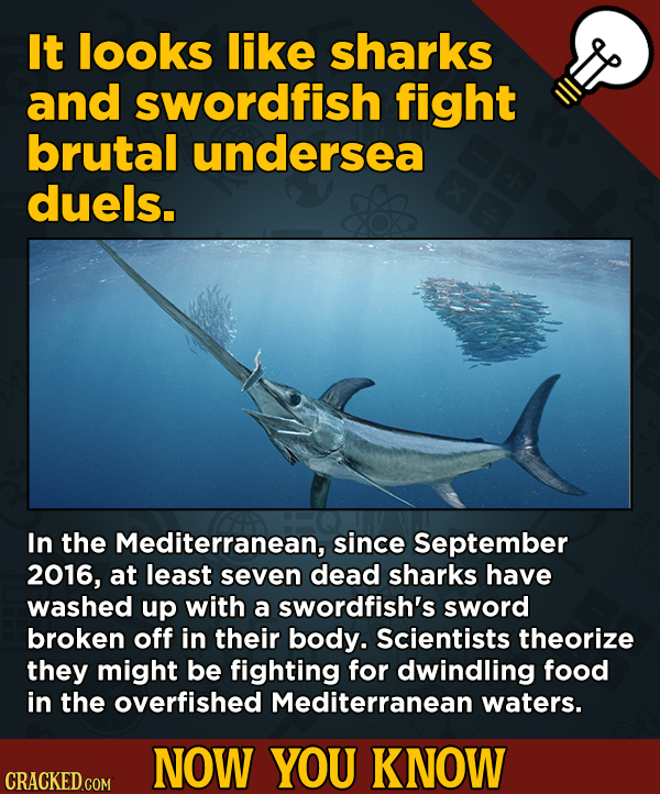 13 Little Things You Didn't Know About Movies And A Bunch Of Other Subjects - It looks like sharks and swordfish fight brutal undersea duels.