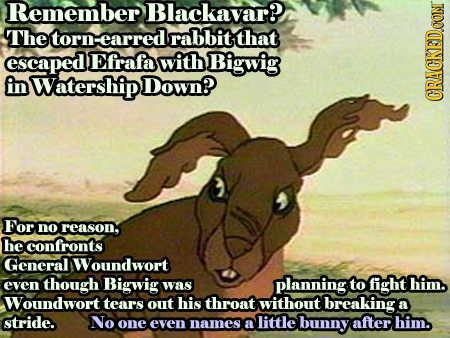 Remember Blackavar? The torn: earred rabbit that escaped Efrafa with Bigwig in Watership Down? CRACKEDCON For no reason, he confronts General Woundwor