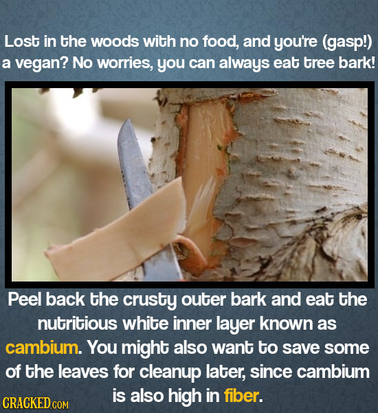 Lost in the woods with no food, and you're (gasp!) a vegan? No worries, you can always eat tree bark! Peel back the crusty outer bark and eat the nutr