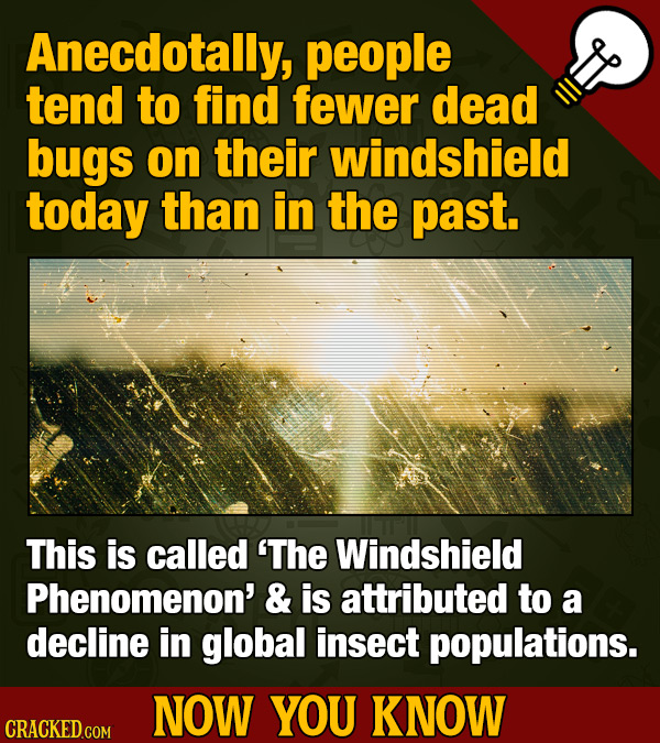 Anecdotally, people tend to find fewer dead bugs on their windshield today than in the past. This is called 'The Windshield Phenomenon' & is attribute