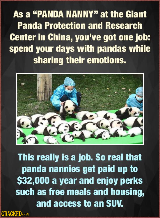 As a PANDA NANNY at the Giant Panda Protection and Research Center in China, you've got one job: spend your days with pandas while sharing their emo
