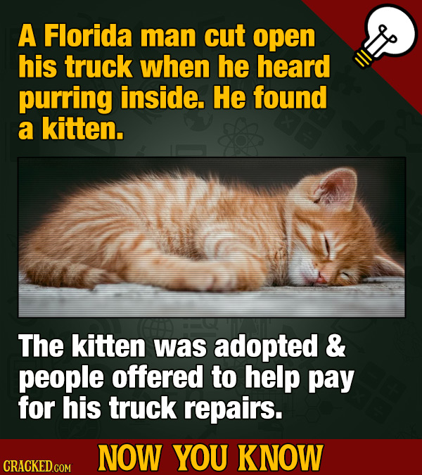 A Florida man cut open his truck when he heard purring inside. He found a kitten. The kitten was adopted & people offered to help pay for his truck re