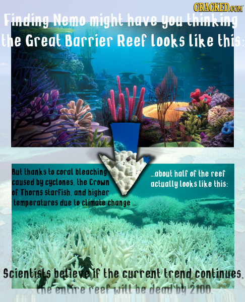 ORACKEDCO Finding Nemo might have you thinking the Great Barrier Reef looks like this But thanks to coral bleaching ...about half of the reef caused b