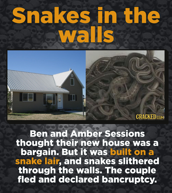 Creepy Discoveries That People Stumbled Into - Ben and Amber Sessions thought their new house was a bargain. But it was built on a snake lair, and sna