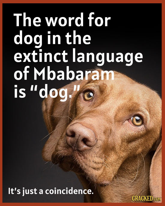 The word for dog in the extinct language of Mbabaram is' dog. It's just a coincidence. CRACKEDCOMT