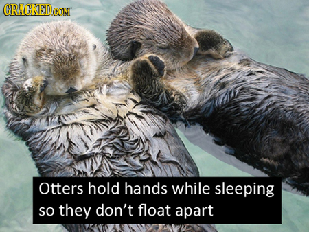 20 Mind-Blowing Facts That Will Put a Smile On Your Face