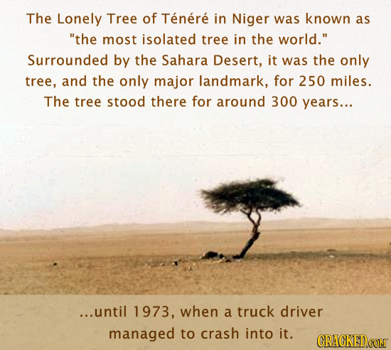 The Lonely Tree of Tenere in Niger was known as the most isolated tree in the world. Surrounded by the Sahara Desert, it was the only tree, and the