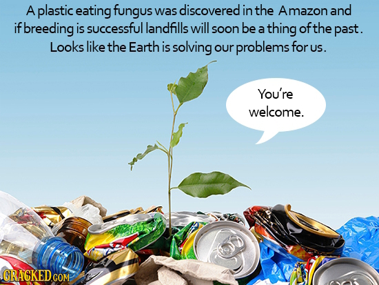 A plastic eating fungus was discovered in the Amazon and if breeding is successful landfills will soon be thing ofthe a past. Looks like the Earth is
