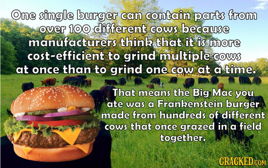 One single burger can contain parts from over 100 different coWS because manufacturers thinb that it is more cost-efficient to grind multiple coWS at