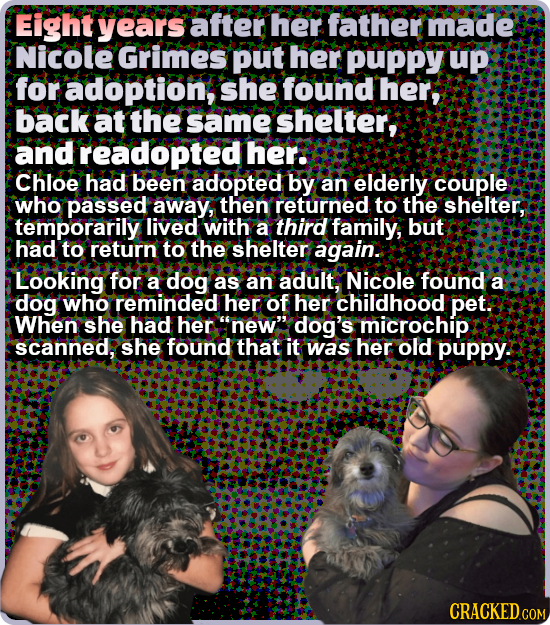 Eight years after her father made Nicole Grimes put her puppy up for adoption, she found her, back at the same shelter, and readopted her: Chloe had b