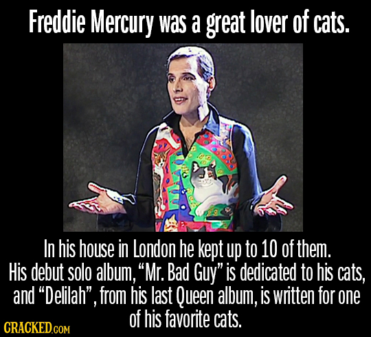 Freddie Mercury was a great lover of cats. loe In his house in London he kept up to 10 of them. His debut solo album, Mr. Bad Guy is dedicated to hi
