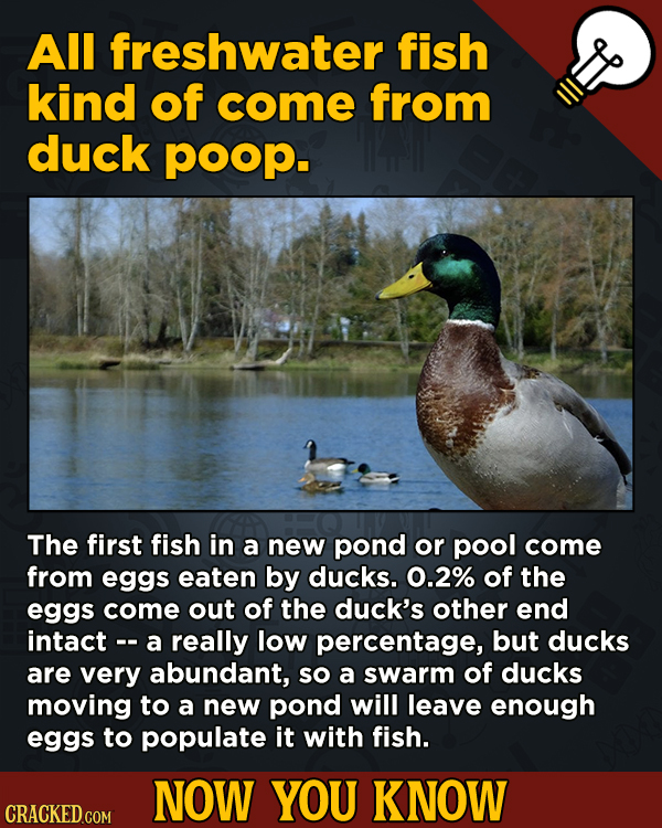 A Fresh Boatload Of Movie And General Trivia - All freshwater fish kind of come from duck poop.