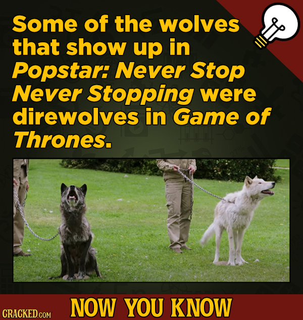 A Fresh Boatload Of Movie And General Trivia -  Some of the wolves that show up in Popstar: Never Stop Never Stopping were direwolves in Game of Thron