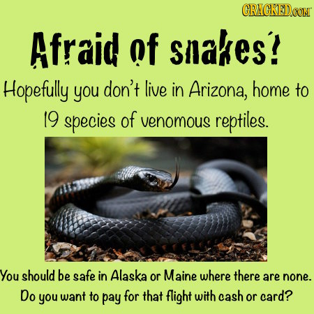 Afraid of slakes! Hopefully you don't live in Arizona, home to 19 species of venomous reptiles. You should be safe in Alaska or Maine where there are