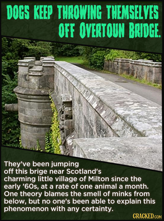 DOGS KEEP THROWING THEMSELVES OFF OVERTOUN BRIDGE. They've been jumping off this brige near Scotland's charming little village of Milton since the ear