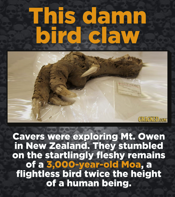Creepy Discoveries That People Stumbled Into - Cavers were sxploring Mt. Owen in New Zealand. They stumbled on the startlingly fleshy remains of a 3,0