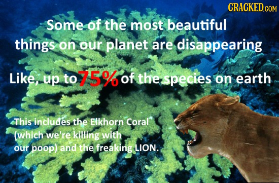 Some of the most beautiful things on our planet are disappearing Like, up to 75% of the species on earth This includes the Elkhorn Coral (which we're
